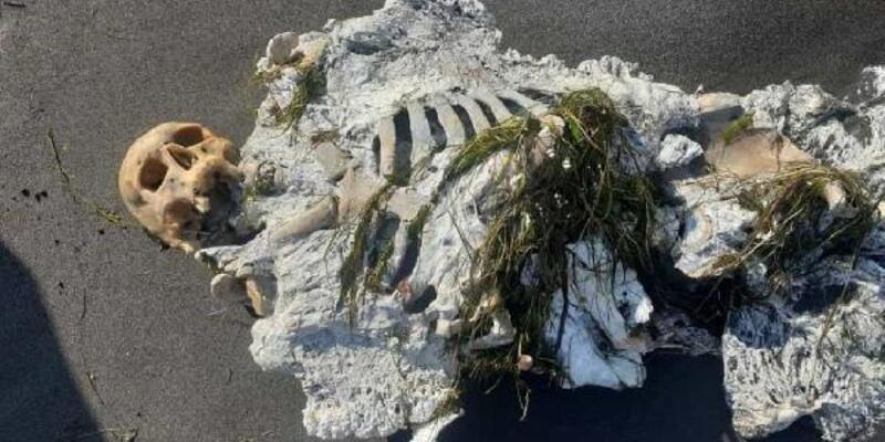 Samsun'da kıyıya vuran iskelete inceleme
