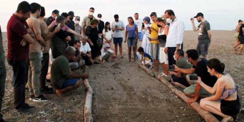 Manavgat sahilindeki ilk caretta caretta yavruları denize ulaştı