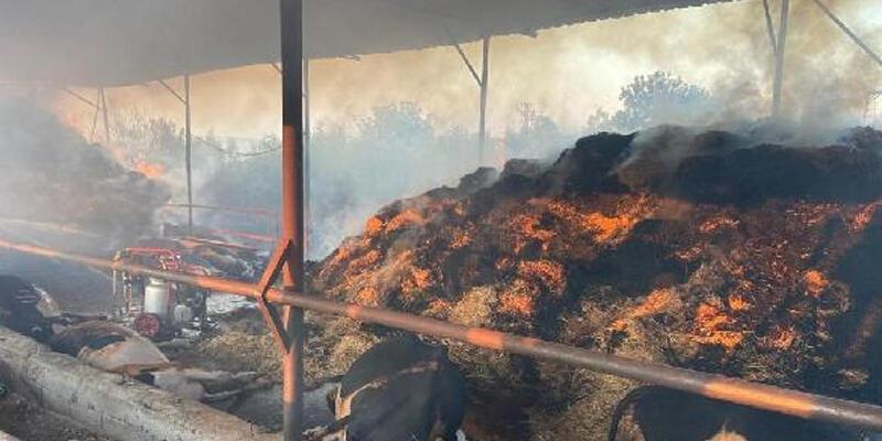 Ahırda çıkan yangında 13 büyükbaş öldü