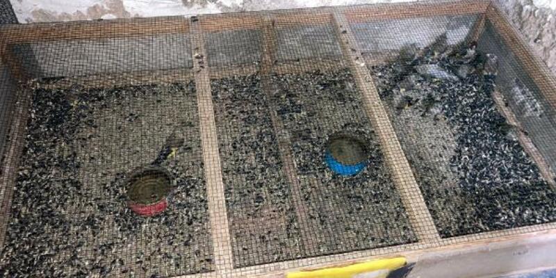 Beslenmesi yasak saka kuşu satışına 120 bin lira ceza