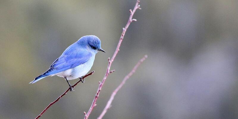 Rüyada Kuş Görmek Ne Anlama Gelir? Rüyada Kuşun Uçması Neye İşarettir?