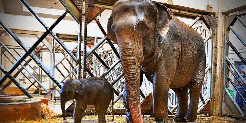 Filler için kanun çıkardılar! 4 saatten fazla çalışmayacaklar