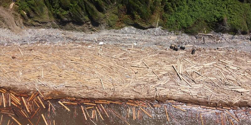Sel sonrası denizdeki tomruklar toplanıyor