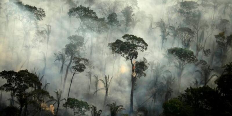 Brezilya ormanları kritik eşiğe geldi