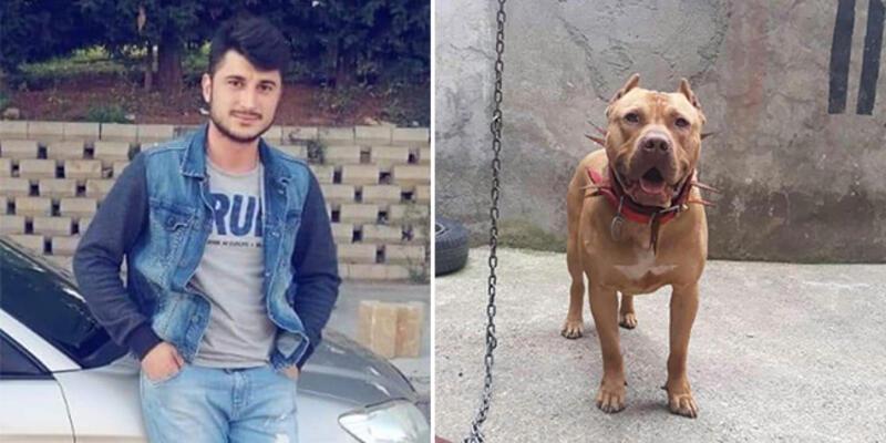 Yüzerken pitbull saldıran genç hayatını kaybetti iddiası