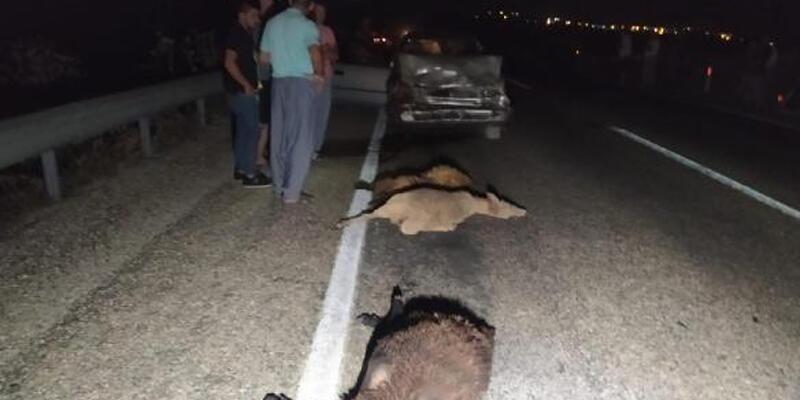 Otomobil sürüye çarptı! 10 koyun öldü, 2 kişi yaralandı
