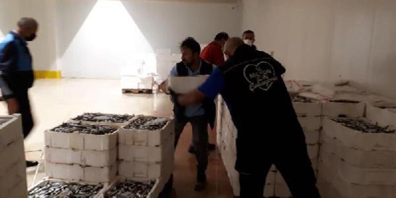 Boy yasağına aykırı avlanılan 2 ton istavrite el konuldu