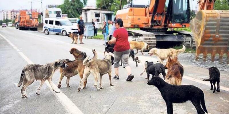 Danıştay'dan emsal karar: Sahipsiz hayvana belediye bakacak