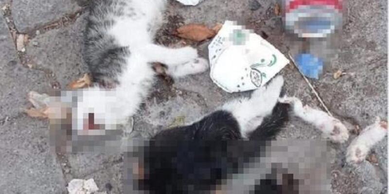 Vahşet! Biri bacakları ve başı kesilmiş 2 yavru kedi bulundu