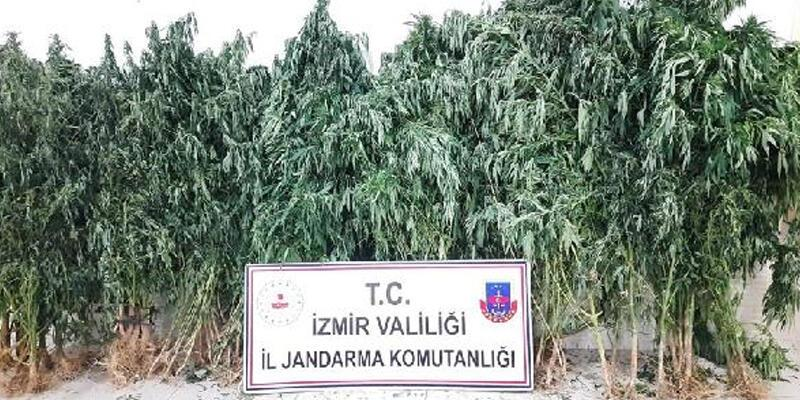 Jandarmadan uyuşturucu operasyonu; 3 tutuklama