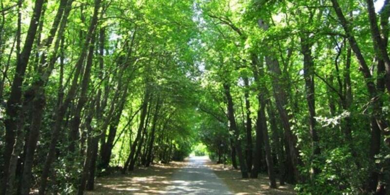 Muğla'da ormanlık alanlara giriş yasağı 1 Ekim'e uzatıldı