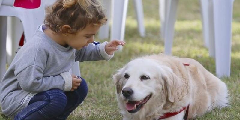 Rüyada Köpek Sevmek Ne Anlama Gelir? Rüyada Köpek Okşamak Nasıl Yorumlanır?
