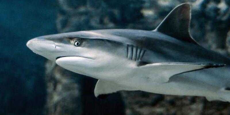 3 bin 493 köpekbalığı yüzgecine el konuldu