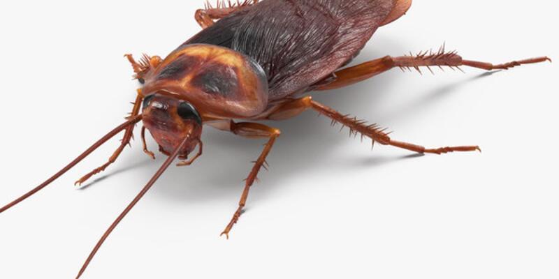 Rüyada Hamam Böceği Görmek Ne Anlama Gelir? Rüyada Kara Fatma Görmek Nasıl Yorumlanır?