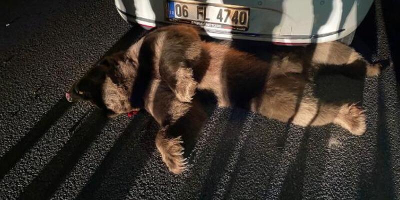Bursa'da otomobilin çarptığı ayı öldü
