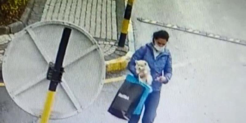 Önce sevdi, sonra alıp gitti: Köpeği çalan kadın kamerada