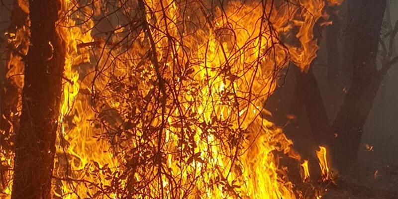 Son dakika... Kütahya'da 4 farklı noktada yangın!