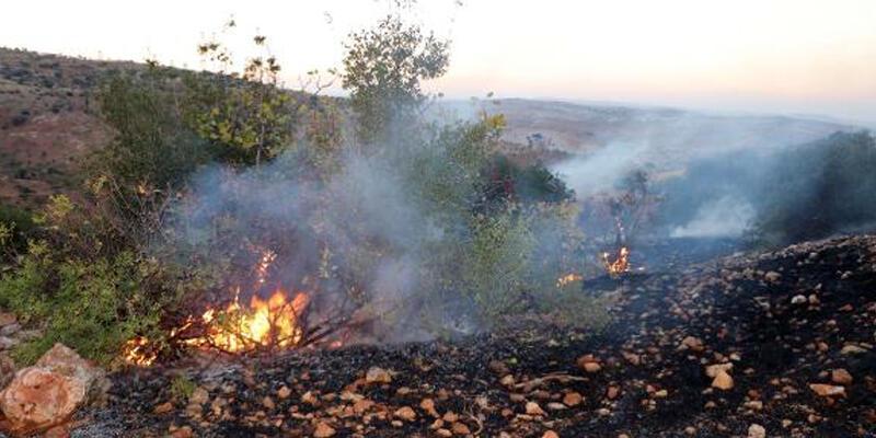 Gaziantep'te çıkan yangında 50 dönüm alandaki ağaç zarar gördü