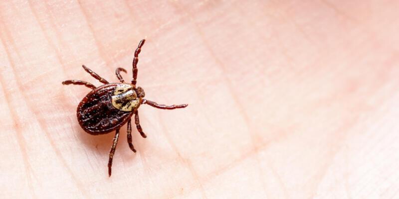 Yezo virüsü nedir, belirtileri neler?