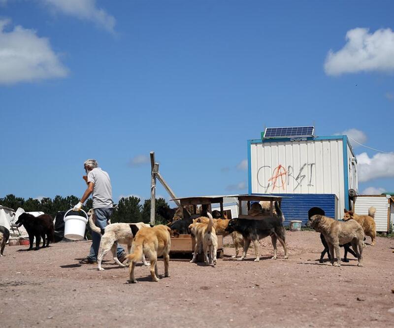 Sahipsiz köpekler için aşevi, misafirhane ve yetimhane açtı