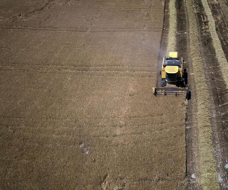 Konya Ovası'nda erken hasat