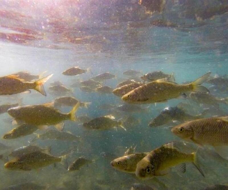 Batman'daki balıklı göl turizme kazandırılacak