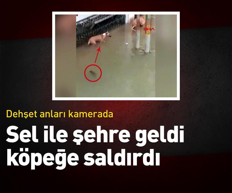 Son dakika: Sel suları ile şehre geldi, köpeğe saldırdı