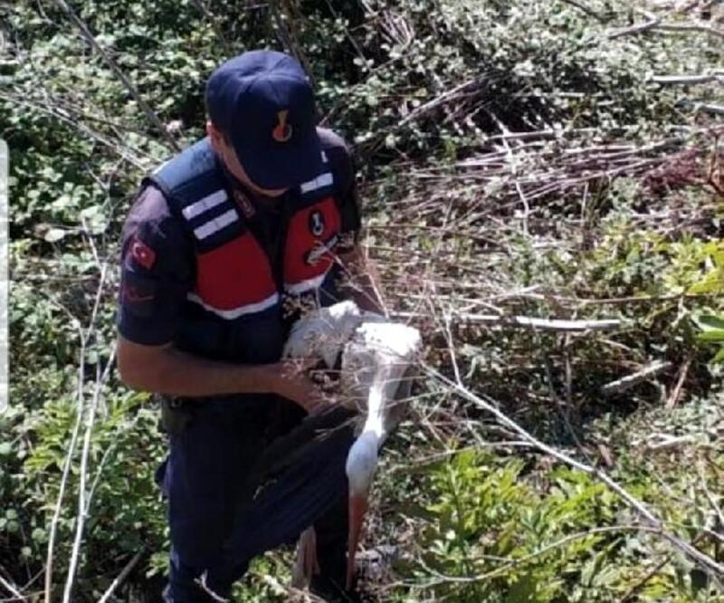 Jandarmanın bulduğu yaralı leylek tedavi edildi