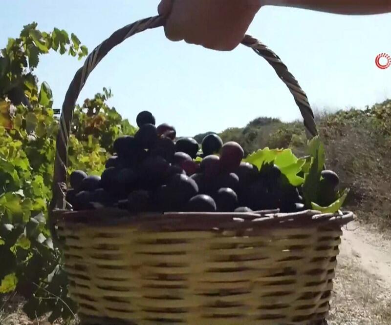 Bozcaada'da üzüm turizmi