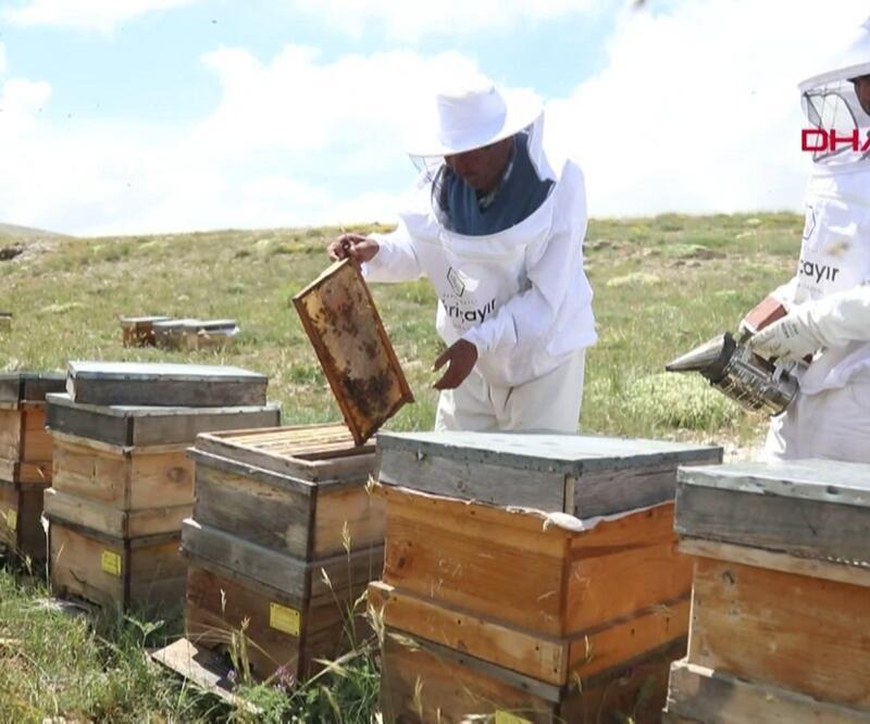 Küresel ısınma arıları vurdu