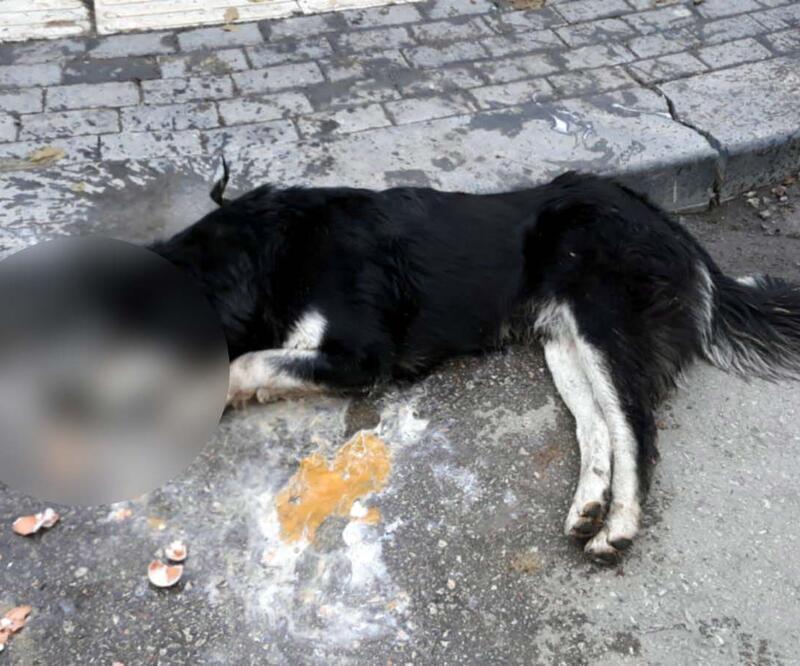 Ankara'da 20 sokak hayvanını kasap zehirlemiş