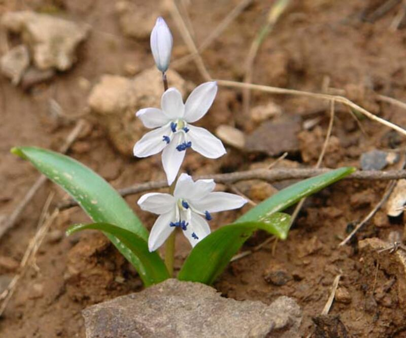 Bu bitki ilk kez keşfedildi