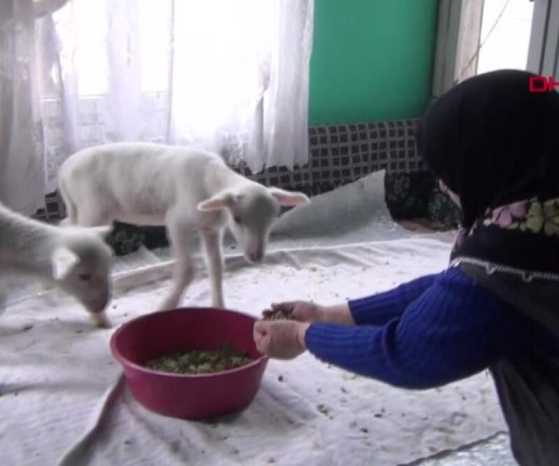 Kuzularına yem istedi, torun sanıp gıda getirdiler