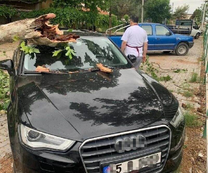 Otomobilin üzerine ağaç devrildi