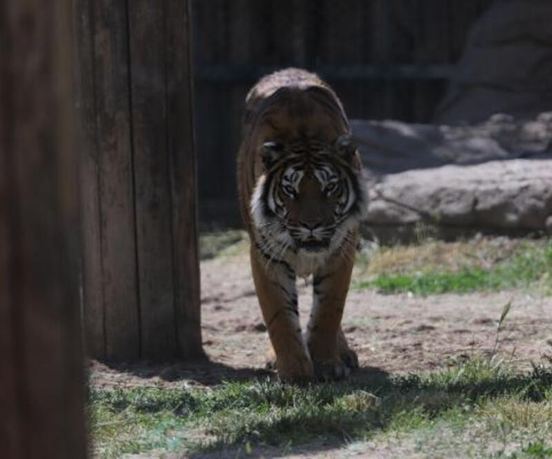 Kayseri Hayvanat Bahçesi, yarın ziyarete açılıyor