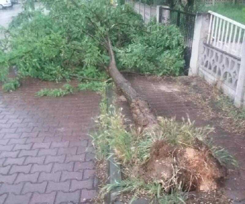 Bilecik'te, şiddetli rüzgar ağaçları kökünden söktü