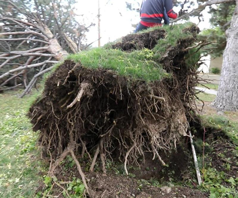 ABD'de 160 km'lik rüzgar binlerce ağacı devirdi   Video