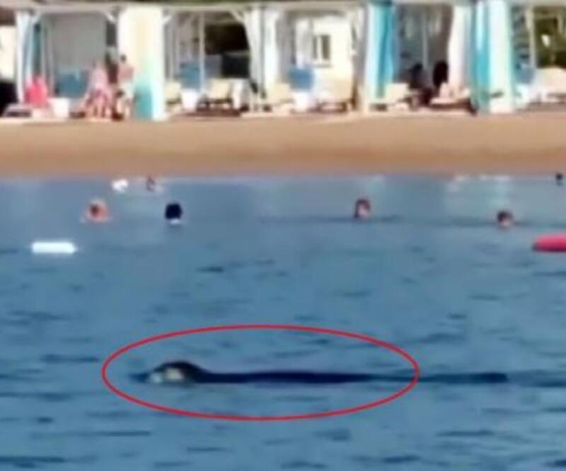 Son dakika.. Akdeniz foku, Antalya'da turistlerle yüzdü