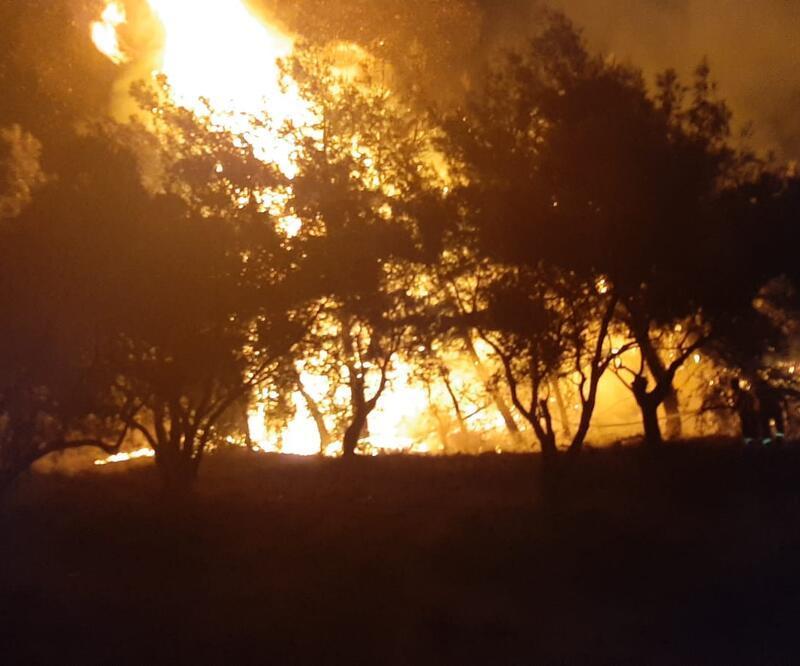 Zeytinlik alanda yangın çıktı