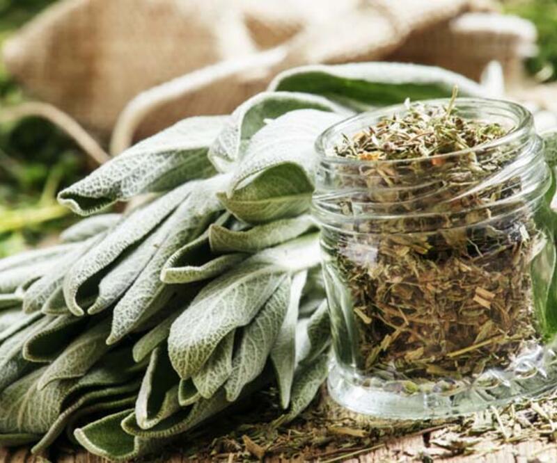 Prof. Dr. İbrahim Saraçoğlu önermişti! Ada çayının Covid-19'a karşı etkisi kanıtlandı