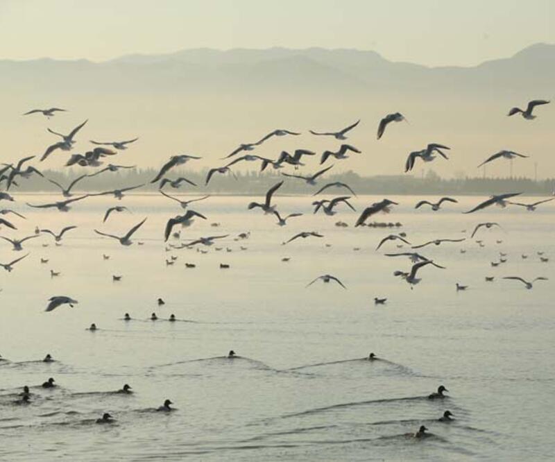 Flamingolar'dan görsel şov
