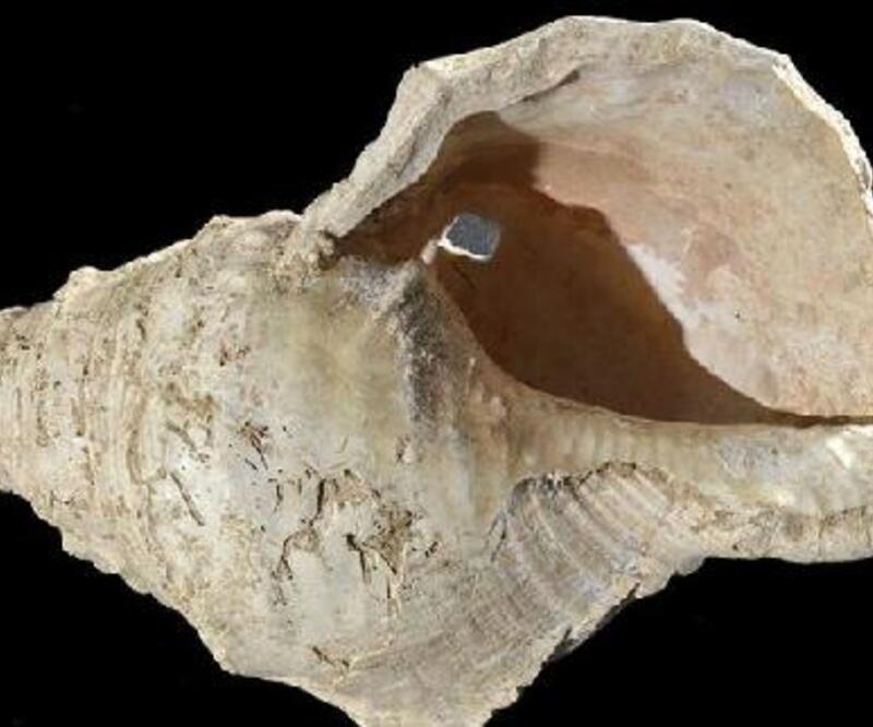 17 bin yıllık müzik aleti olan deniz kabuğu yeniden ses verdi