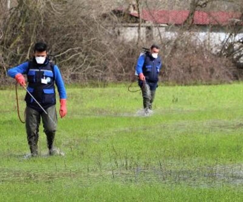Karabağlar Yaylası'nda 350 hektarlık sulak alanda biyolojik vektör mücadelesi başladı