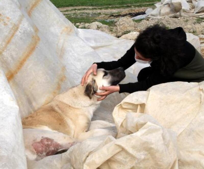 Komşusu, üniversiteli Fatma'nın köpeğini vurdu, 'Aynısını sana da yaparım' diye tehdit etti