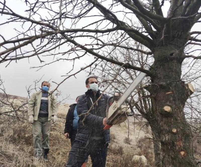 Tunceli'de, menengiç ağaçlarında Antep fıstığı yetişecek