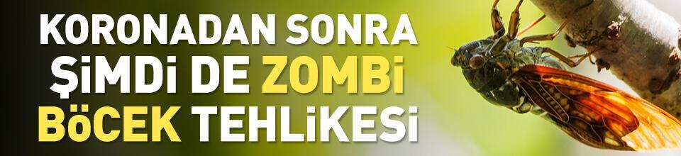 ABD'de koronavirüsün ardından zombi böcek tehlikesi